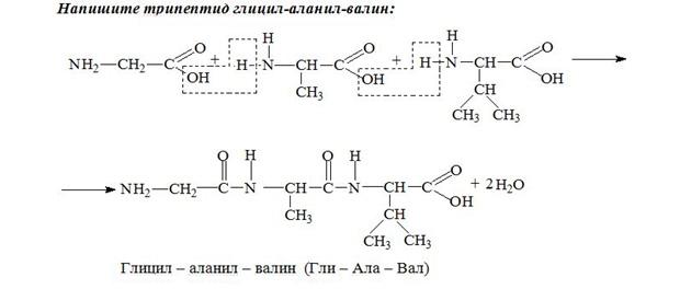 Задачи и решение биохимия решение задач движение течению против течения